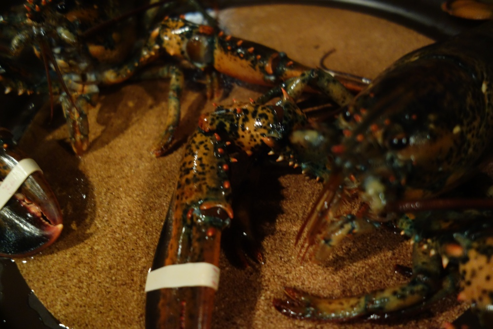 Lobsters in happier times